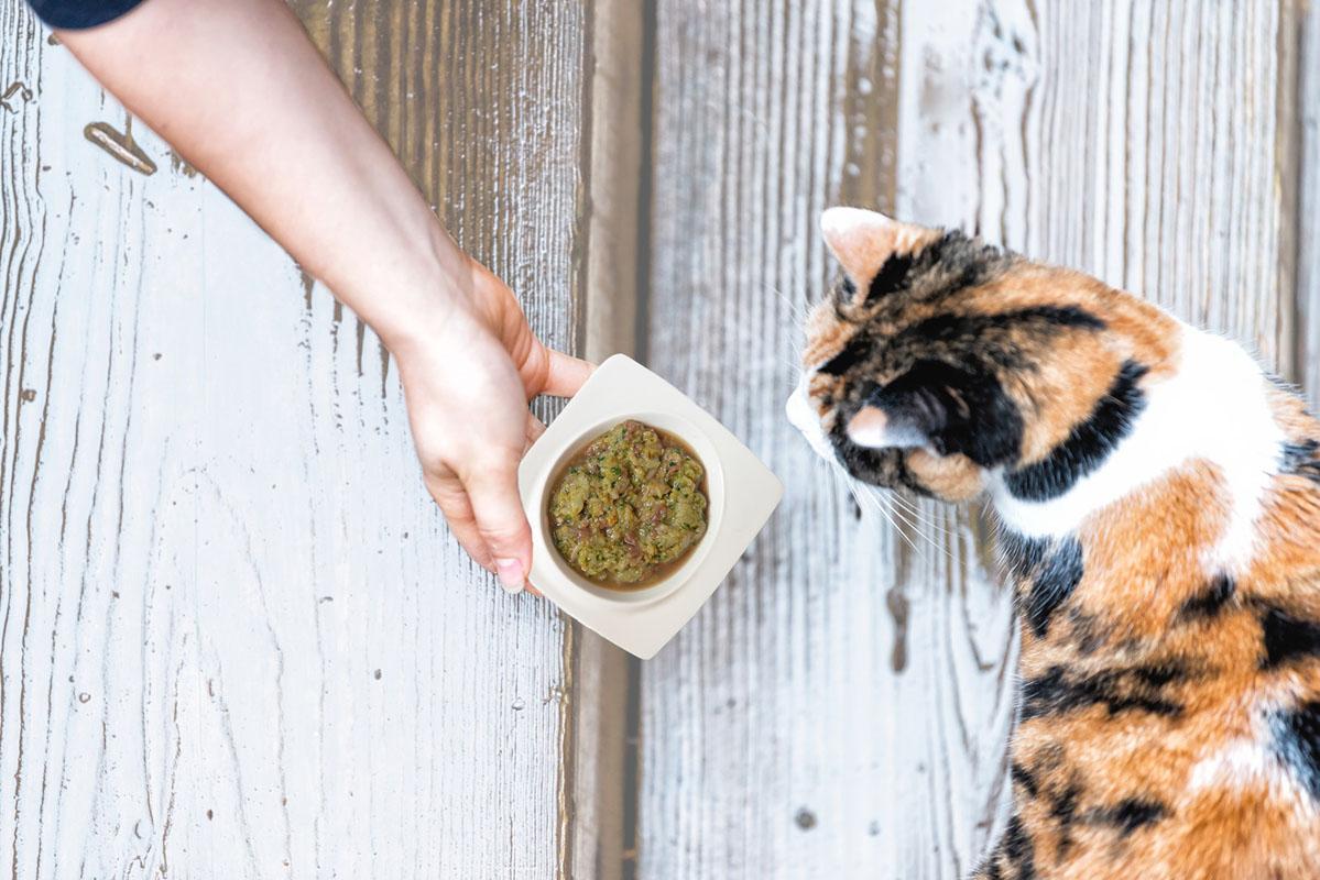 Catfoodphotobowl